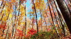 Colorful Hike Through the Smoky Mountains Photo and caption by Ana Sanchez-Moreland @Smithsonian Magazine Photographed October 2012, Gatlinburg,TN