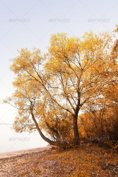 autumn trees ...  autumn, background, beautiful, blue, brown, colorful, colors, copy space, day, evening, fall, foliage, footpath, forest, golden, grass, green, lake, landscape, leaves, light, natural, nature, november, october, orange, outdoors, park, peace, reflection, river, scene, scenery, scenic, season, shadow, sharp, silence, sky, stem, sunset, trees, view, warm, water, wood, wooden, yellow