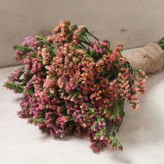 Add delicate statice flowers to fresh and dried bouquets. Our statice seeds are satisfaction guaranteed. Cut Flower Garden, Flower Farm, My Flower, Flower Ideas, September Flowers, Bouquet, Cat Flowers, Growing Seeds, Farm Gardens