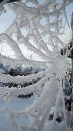 Frozen spider web