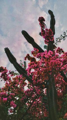 Summer Wallpaper, Flower Wallpaper, Iphone Wallpaper, Screensaver, Wander, Cactus, Bloom, Flowers, Wall Papers