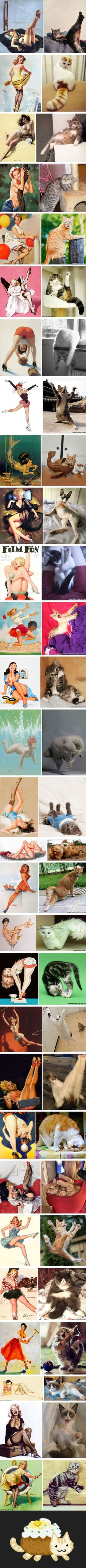 29 Cats Posing Like Pin Up Girls and it is so purrfect Funny Cat Photos, Funny Animal Pictures, Best Funny Pictures, Funny Cats, Funny Animals, Cute Animals, Pin Up Girls, Cat Anime, Cat Icon