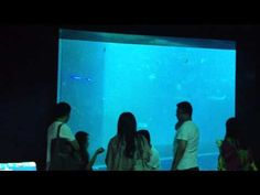 Room completely surrounded by aquariums