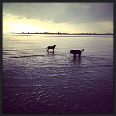 Mabel and Margot take an early morning paddle