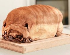 "This is the opposite of ""Visual Art with Food"".  Instead of bread shaped as a dog, it's a dog shaped as bread.  I like the associative power of this picture, do you agree it was a good idea to post it in this board?"