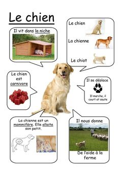 Chien - Animaux de la ferme www. animals silly animals animal mashups animal printables majestic animals animals and pets funny hilarious animal French Teacher, Teaching French, How To Speak French, Learn French, Science For Kids, Science And Nature, Writing Activities, Activities For Kids, Core French