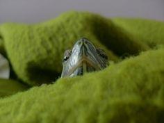 November photo contest: CBC Pets