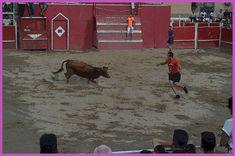 Santacara: Vacas de Pedro Domínguez de Funes en Santacara