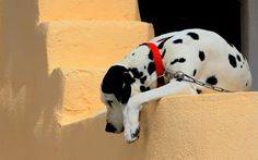 Funny wallpapers wallpaper cartoon stupid dalmatian dog