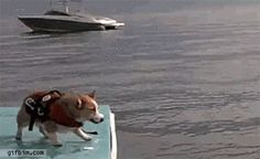 The 21 Funniest Dog GIFs Ever