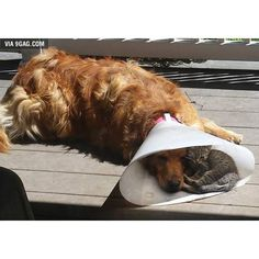 It's great to have a buddy when you're down and out #9gag