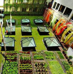 Hotel Omm, Huerto .. vegetable garden