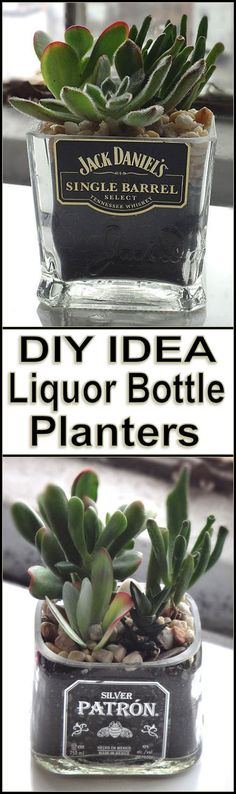 DIY Liquor Bottle Planters --- love the idea of re-using glass liquor bottles... Could make candles with them too