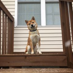 Trying to figure out what's going on out there! (i.redd.it) submitted by jcebatrading to /r/shiba 0 comments original - Cute Puppies - Pitbull - German Shepard - Golden Retriever - Beagle - Bulldog - Chihuahua - English Setter - Maltese - Pug - Rottweiler - Wells Terrier - Shihtzu - Labrador - Husky - Vizsla Puppy Breeds - Pets in Clothes - Animal Training Pictures