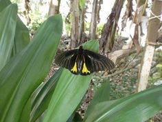 A moth resting on one of the leaves of the flowers near the guest quarters. Photo by Hadrian Mar Elijah Bar Israel.