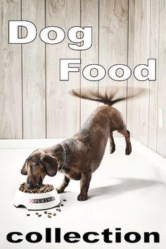 愛犬思いのドッグフード|電子看板おじゃまサイトリスト