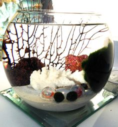 Marimo moss ball aquascape in the tropical by EclecticZenMarimo, $35.00