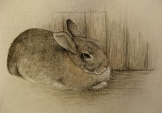 Rabbit on the Floor by Maija Laaksonen (moussee.deviantart.com) @deviantART