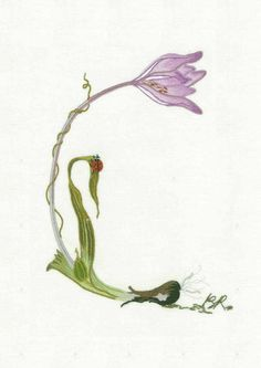 Alphabet Botanique C. C is for crocus....stamped on fine linen by benedicte reveihac at www.thefrenchneedle.com