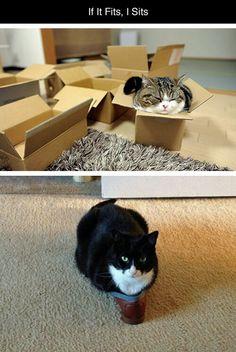 Kočka 9