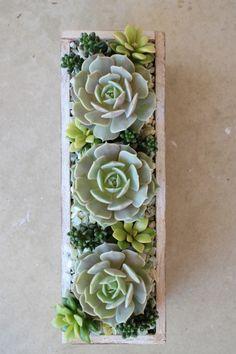 Succulent arrangement.