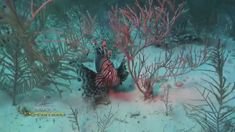 What started the lionfish invasion in the Atlantic?