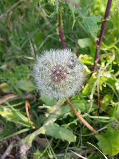 #myphotojournal 接觸大自然,一種心靈治癒. #nature #meditation  既來之,則安之. 他,可能是你遇過最美麗的邂逅.