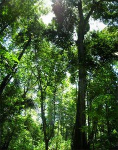 tiers of rainforest