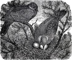 Vintage Birds Nesting Image - The Graphics Fairy