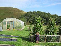 The Tangled Yarn: Smallholding Update: September 2012