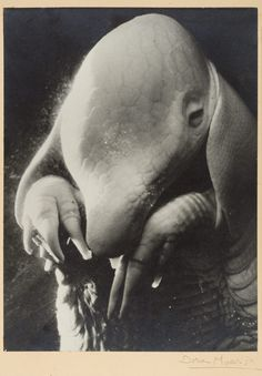Père Ubu  Dora Maar (French, Paris 1907–1997 Paris) 1936 Gelatin silver print 39.7 x 29.2 cm (15 5/8 x 11 1/2 in.)