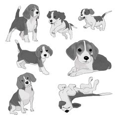 Beagles and beagles. For one of my project I've been drawing dogs... I'm not used to it but is super fun #pascalcampion #pascalcampionart #beagles #dogsofinstagram #illustration #sketches