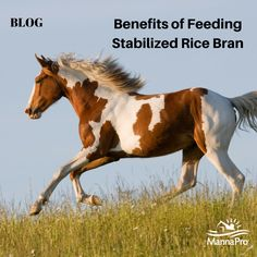 The hype on rice bran for horses.