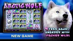 """Cleos VIP Room """"Arctic Wolf"""" is a 50 line video slot game with a minimum bet of $.50 cents """"Arctic Wolf"""" video slot can be played at Cleos Vip Room"""