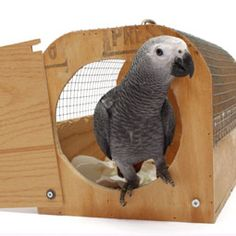If your pet bird doesn't like to travel, use these tips to teach it to enjoy traveling with you. (I like the carrier! Timneh African Grey, African Grey Parrot, Cockatiel, Budgies, Parrots, Animals And Pets, Cute Animals, Diy Bird Toys, Crazy Bird
