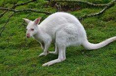 animales blancos - Buscar con Google