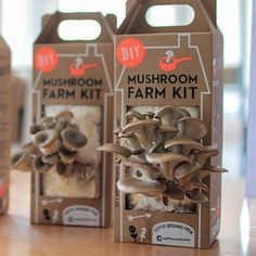 Fascinated by the idea of waste being turned into a product, Nikhil Arora  and Alejandro Velez experimented with the idea of growing mushrooms from  recycled coffee grounds. Now in the market as the Mushroom Farm Kit, their  product test rapidly evolved from a small start-up to a successful business  making revolutionary strides in interactive packaging.