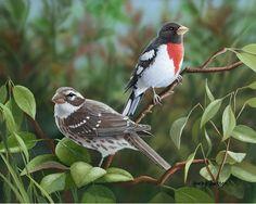 COSICAS VARIAS: Hermosas aves.-Bradley Jackso Art