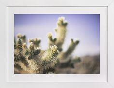 Joshua Tree Blooming Cactus by Alexandra Nazari at minted.com