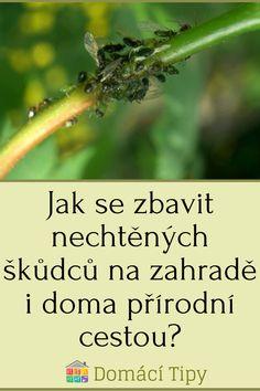 Jak se zbavit nechtěných škůdců na zahradě i doma přírodní cestou? Herbs, Gardening, Lawn And Garden, Herb, Horticulture, Medicinal Plants