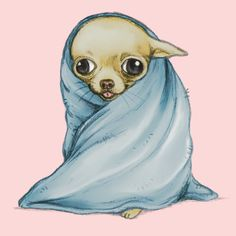 """Chihuahua Wrapped in a Blanket"""" T-Shirts & Hoodies by Katie ..."""
