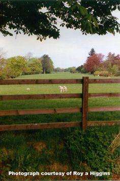 Lambing time. Photograph Roy A Higgins
