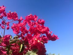 The sky and the flowers