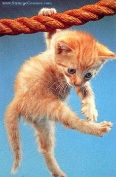 i love orange kittens! Cute Baby Dogs, Baby Cats, Cute Baby Animals, Animals And Pets, Funny Animals, Silly Cats, Cute Kittens, Cats And Kittens, I Love Cats