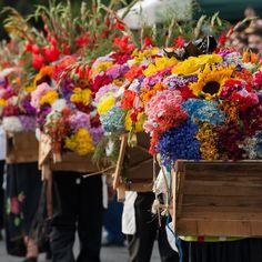 Desfile de Silleteros, Medellin