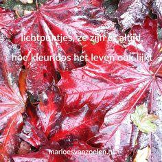 #Lichtpuntje van de week #42 | De rode kleur van de herfst | Wat was jouw #lichtpuntje van de week? | Voor meer #lichtpuntjes zie http://www.marloesvanzoelen.nl