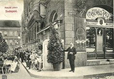 Fork Tales: From a simple pub to serving Hollywood royalty, the legendary Mátyás Pince Old Pictures, Old Photos, Vintage Photos, Dutch Golden Age, Old Money, Budapest Hungary, Best Beer, Vintage Photography, Historical Photos