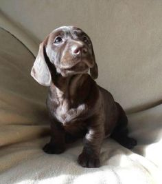 12 Crazy Labrador Crosses You Need In Your Life