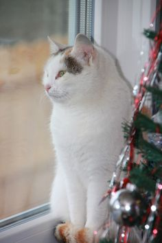 Cat in Window - Public Domain Photos, Free Images for Commercial Use Cat Posters, Beautiful Cats, Public Domain, Free Images, Presents, Winter, Waiting, Commercial, Animals