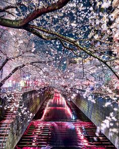 "Destination Earth (@destination.earth) on Instagram: ""Tokyo , Japan Photography by @takashi_komatsubara"""